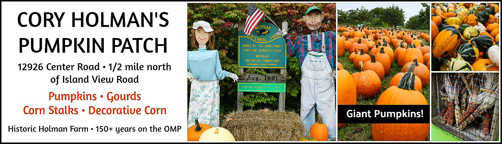 Cory Holman's Pumpkin Patch on the Old Mission Peninsula