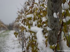 first snow, snow, winter, old mission peninsula, old mission news, old mission photos, pure michigan, northwest michigan, old mission, old mission michigan, old mission gazette, wineries of old mission peninsula