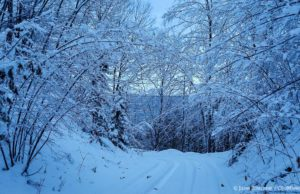 snowy driveway, snow, winter, old mission peninsula, northwest michigan, old mission gazette, peninsula township, old mission, old mission michigan