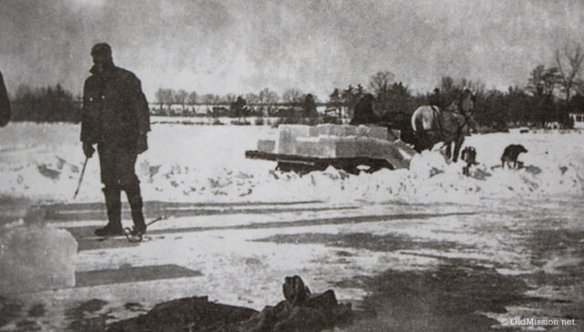 1943-1945, Cutting Ice in Old Mission Harbor: Ted Ayers in foreground with the team moving a load of ice blocks