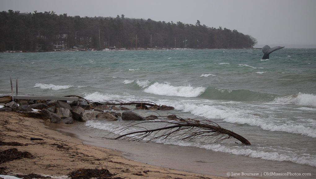 Early Sighting of Lake Michigan Whale Migration off Haserot Beach; Jane Boursaw Photo