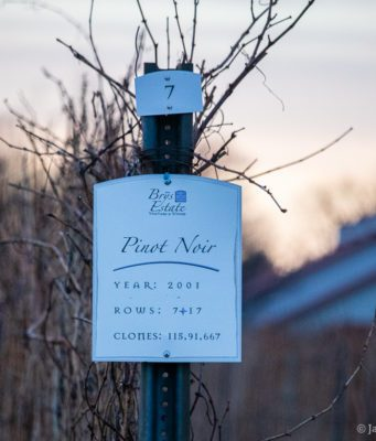 Brys Estate Vineyard Pinot Noir on the Old Mission Peninsula