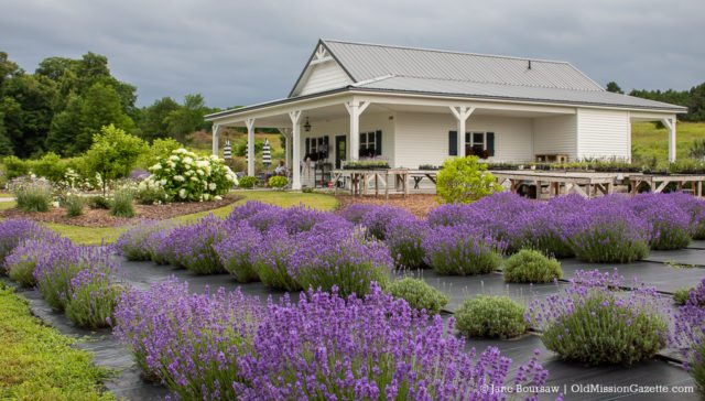 Lavender at Brys Secret Garden on the Old Mission Peninsula