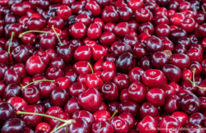 Cherries at Johnson Farms Cooling Pad