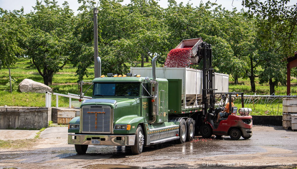 Tart cherries loaded onto a truck at Johnson Farms Cooling Pad | Jane Boursaw Photo