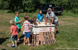 Rocko Fouch gives cherries away at Fouch Farms on the Old Mission Peninsula