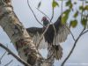 Vulture on Bluff Road on the Old Mission Peninsula | Jane Boursaw Photo