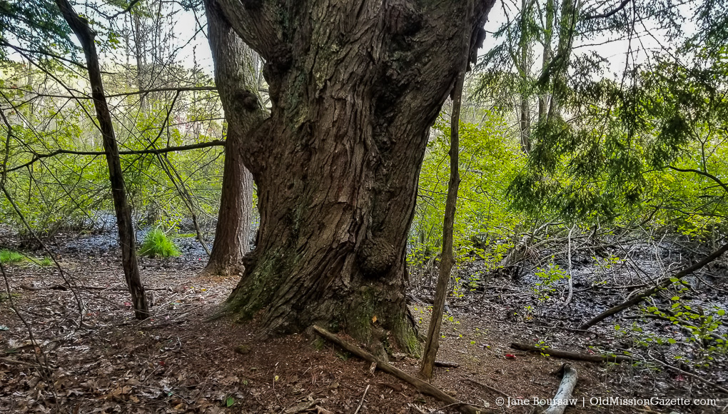 Brinkman Bog Nature Preserve   Jane Boursaw Photo