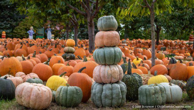 Cory Holman's Pumpkin Patch 2019 | Jane Boursaw Photo