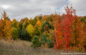 Fall Color at the Hogsback on the Old Mission Peninsula