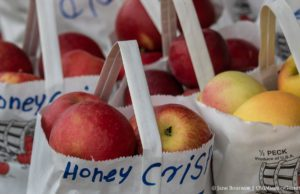 Honeycrisp Apples at Johnson Farms Roadside Stand, 1/2 mile north of Mapleton on the right | Jane Boursaw Photo