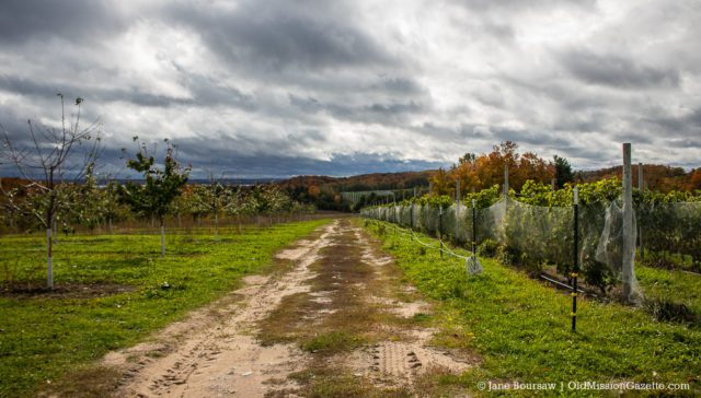 Two-Track on Johnson Farms South on the Old Mission Peninsula | Jane Boursaw Photo