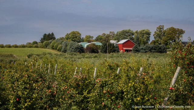 McManus Barn from Johnson Farms Apple Orchard on the Old Mission Peninsula; Reader-Supported Newspaper