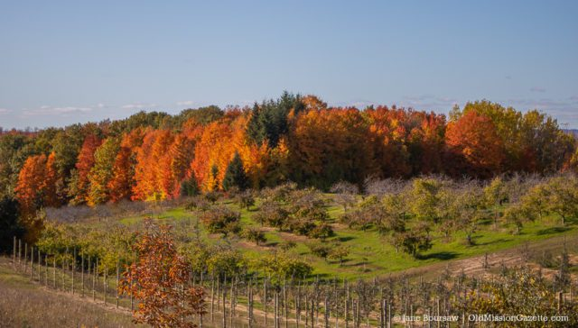 Fall Colors on the Old Mission Peninsula