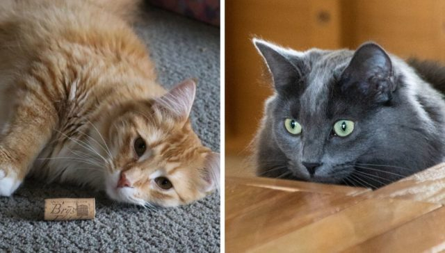 Janis Haine's beautiful cats on the Old Mission Peninsula | Jane Boursaw Photos
