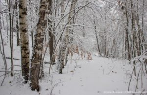 Old Mission Gazette Snowy Woods on the Old Mission Peninsula
