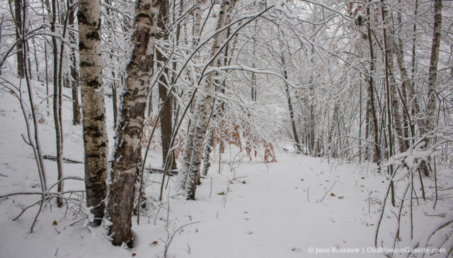 Snowy Woods on the Old Mission Peninsula