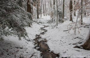 Snowy Woods on the Old Mission Peninsula | Jane Boursaw Photo