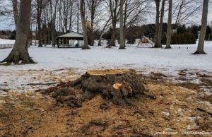 Bowers Harbor Park Tree Cutting on the Old Mission Peninsula | Jane Boursaw Photo