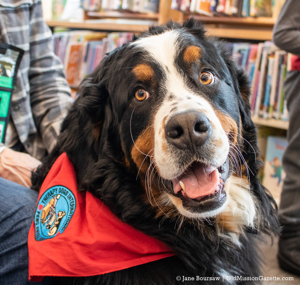 Coco, the Reading Therapy Dog at Peninsula Community Library | Jane Boursaw Photo