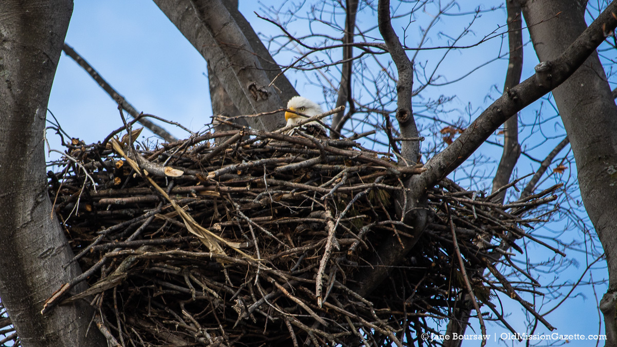 Photo of the Day: Bald Eagle's Nest - With a Bald Eagle In It