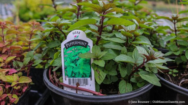 Farm Market Garden Plants