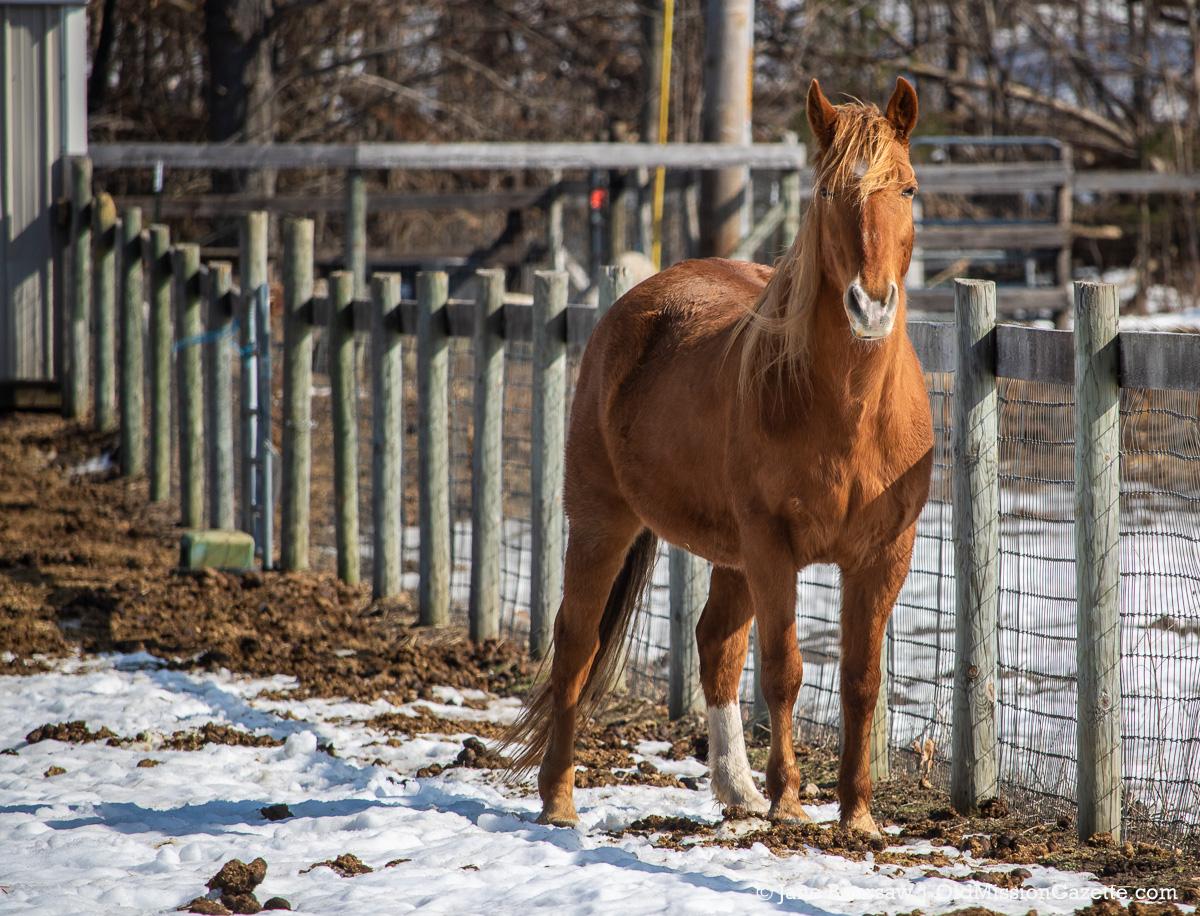 Wares Horse on Peninsula Drive, Old Mission Peninsula | Jane Boursaw Photo