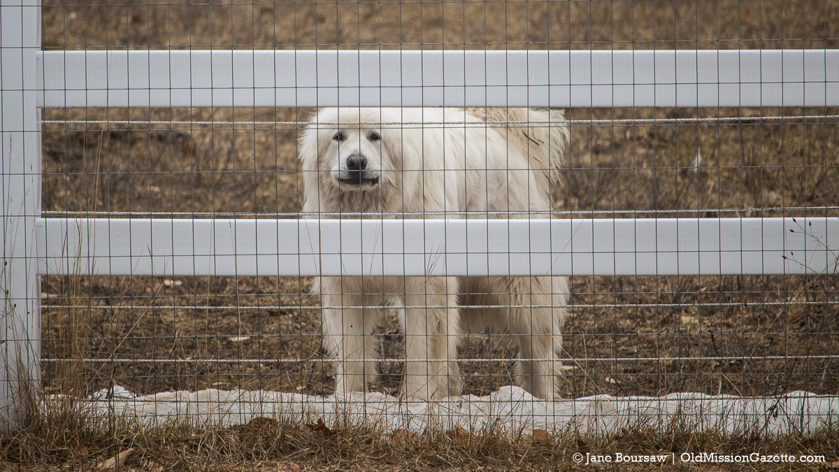 Becky Tester's dogs on Tompkins Road | Jane Boursaw Photo