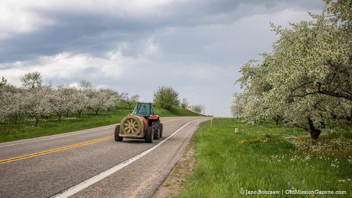 Cherry Blossoms on M37 south of the Hogsback on the Old Mission Peninsula (Ward Johnson on tractor)| Jane Boursaw Photo
