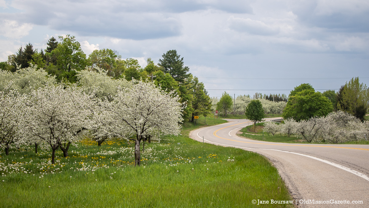 Cherry Blossoms on M37 south of the Hogsback on the Old Mission Peninsula | Jane Boursaw Photo