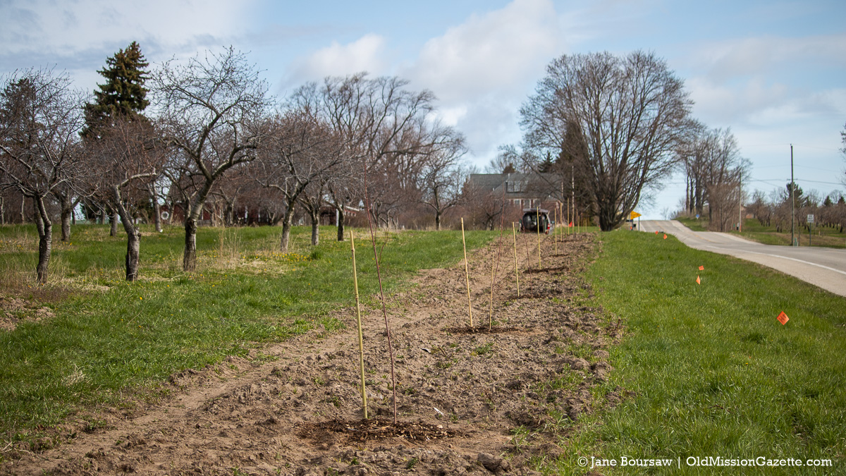 Tree Planters on Center Road on the Old Mission Peninsula | Jane Boursaw Photo