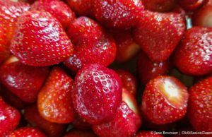Strawberries from Between the Bays Warren Orchards | Jane Boursaw Photo
