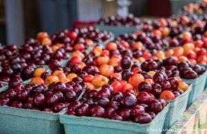 Sweet Cherries at Johnson Farms Fruit Stand on the Old Mission Peninsula | Jane Boursaw Photo