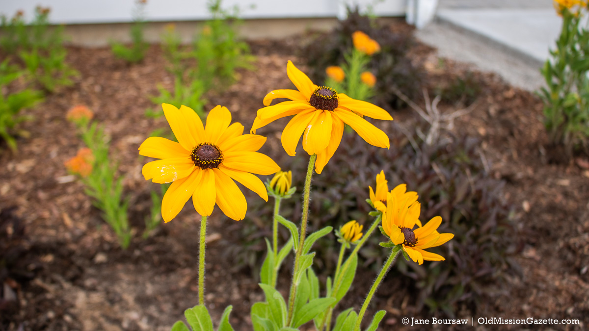 Flowers at the Mack and Lorraine Beers Children's Garden at Peninsula Community Library on the Old Mission Peninsula | Jane Boursaw Photo