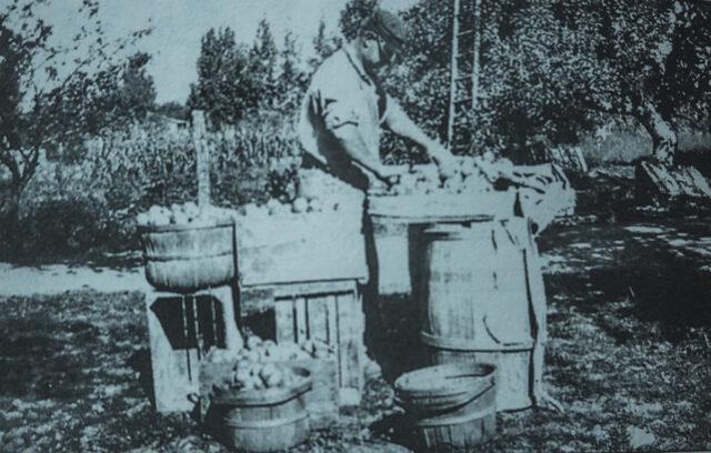 Edgar P. DeVol packing apples bound for Chicago in 1929; John