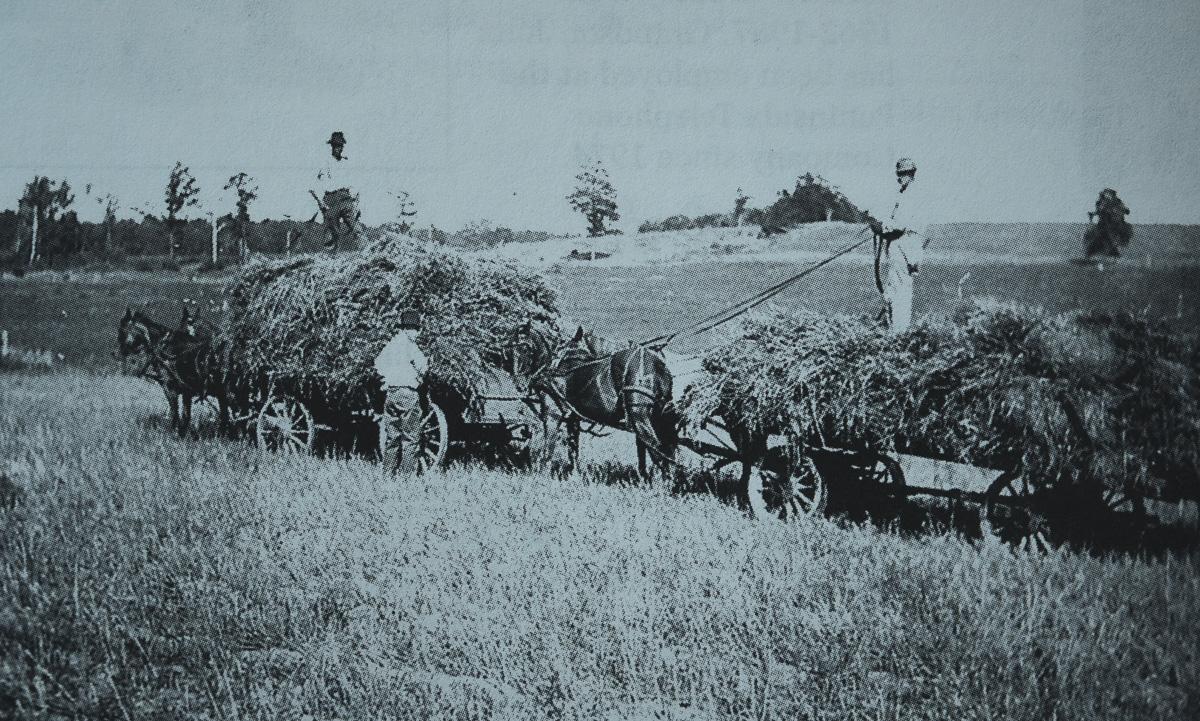 "Edgar P. DeVol harvesting hay; John ""J.D."" DeVol's grandfather | A Century of Service Photo"
