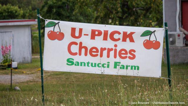 Santucci Farms' U-Pick Cherries on the Old Mission Peninsula   Jane Boursaw Photo