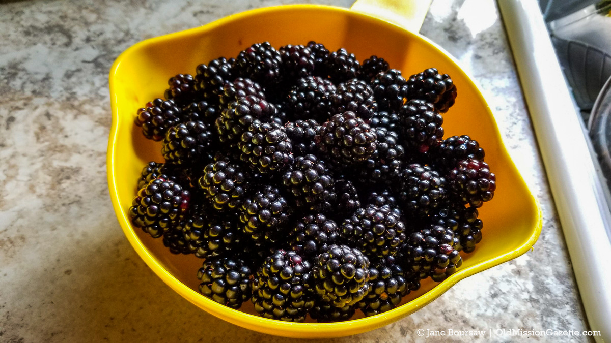 Santucci Blackberries on the Old Mission Peninsula | Jane Boursaw Photo