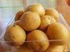 Warren Orchards Potatoes; Old Mission Peninsula | Jane Boursaw Photo