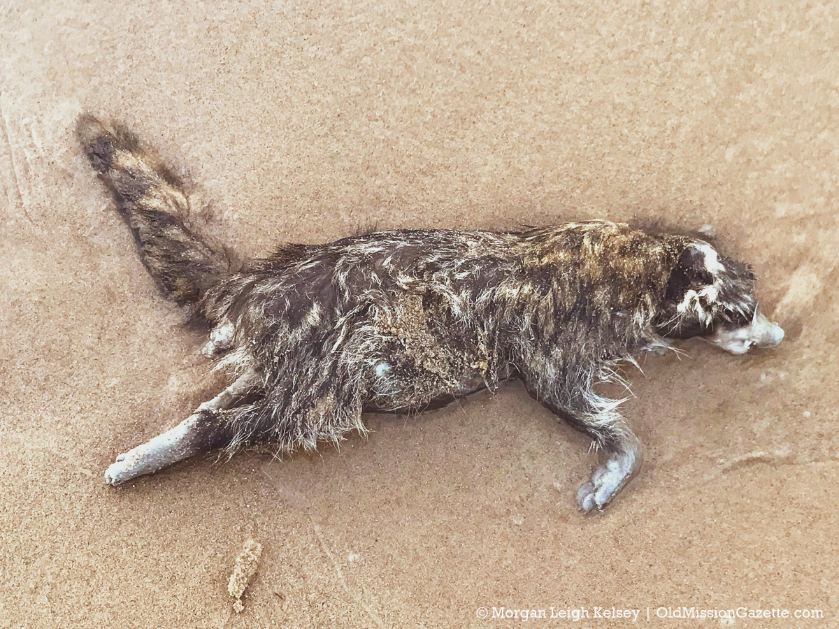 Haserot Beach Creature on the Old Mission Peninsula | Morgan Leigh Kelsey Photo