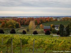 Fall Colors on the Old Mission Peninsula; Chateau Chantal looking west | Jane Boursaw Photo