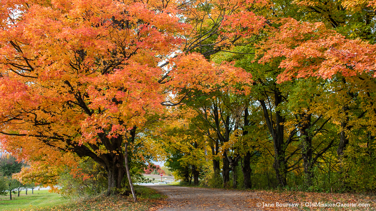 Fall Colors on the Old Mission Peninsula; The Cut-Across from Smokey Hollow Road | Jane Boursaw Photo