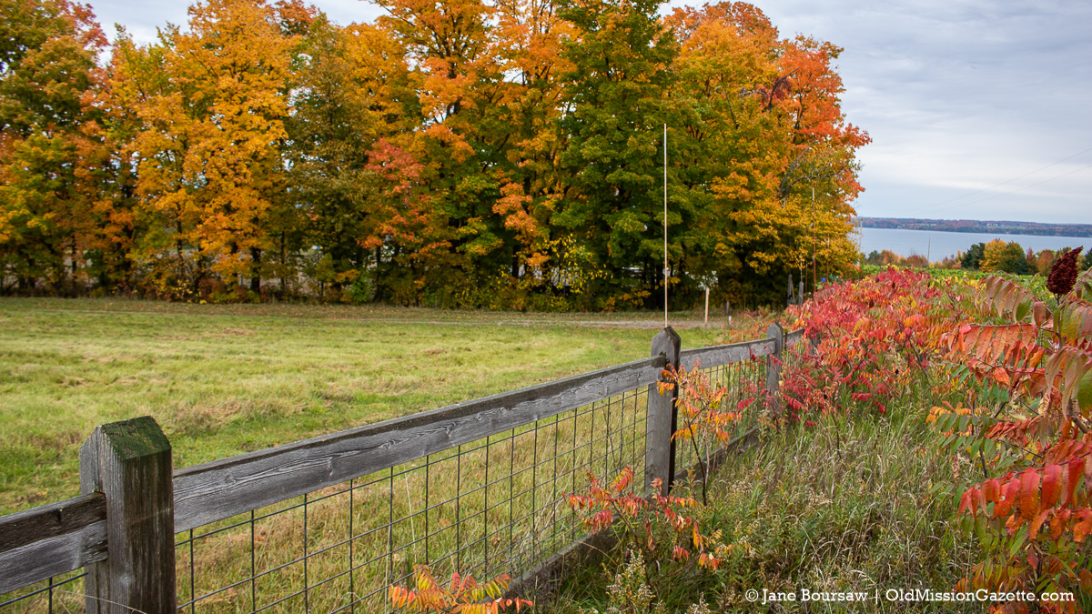 Fall Colors on the Old Mission Peninsula; Top of Wilson Road looking east | Jane Boursaw Photo