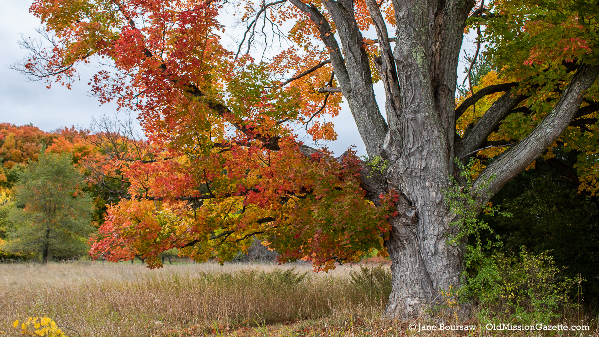 Fall Colors on the Old Mission Peninsula; Looking west from Smokey Hollow Road and Boursaw Road intersection | Jane Boursaw Photo