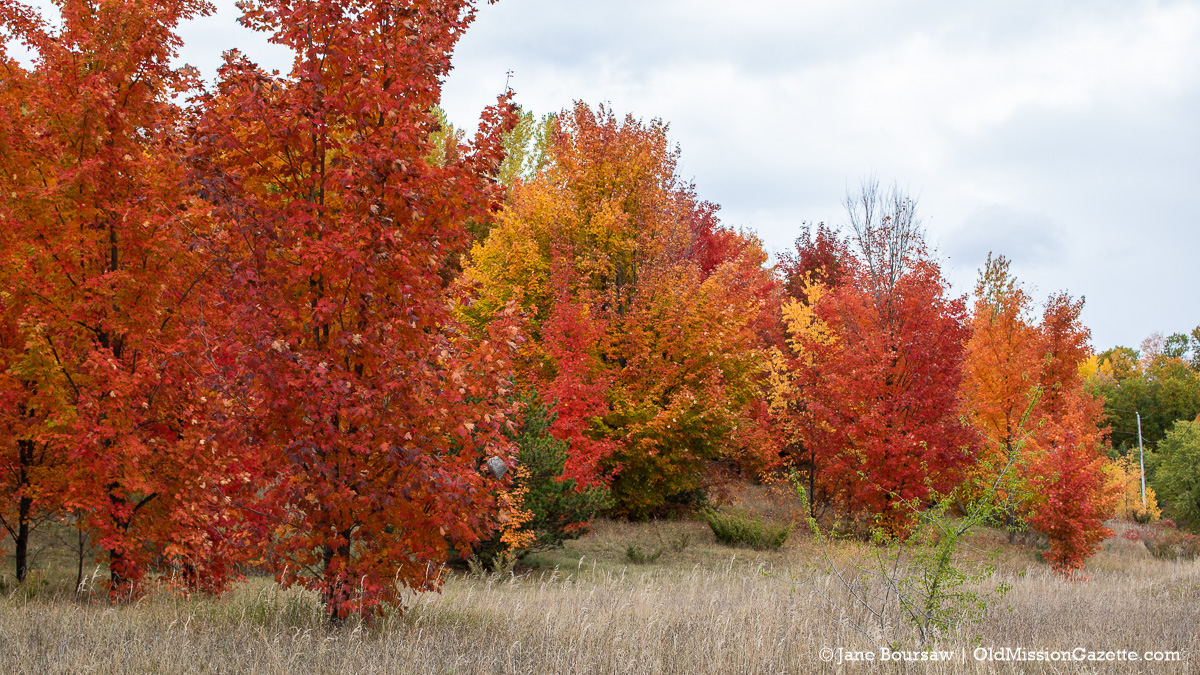 Fall Colors on the Old Mission Peninsula; Smokey Hollow Road looking north from Boursaw Road intersection | Jane Boursaw Photo