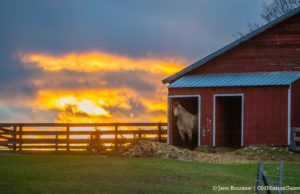 Stormy, Debbie Bee's horse on Swaney Road on the Old Mission Peninsula | Jane Boursaw Photo