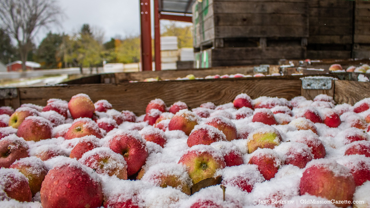 Snow on the apples at Johnson Farms Cooling Pad on the Old Mission Peninsula | Jane Boursaw Photo