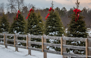 Festive Bows on Peninsula Drive on the Old Mission Peninsula | Jane Boursaw Photo