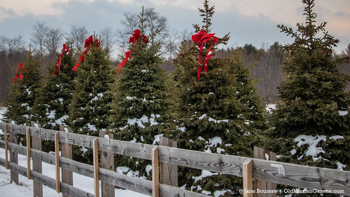 Festive Bows on Peninsula Drive on the Old Mission Peninsula | Jane Boursaw Photo