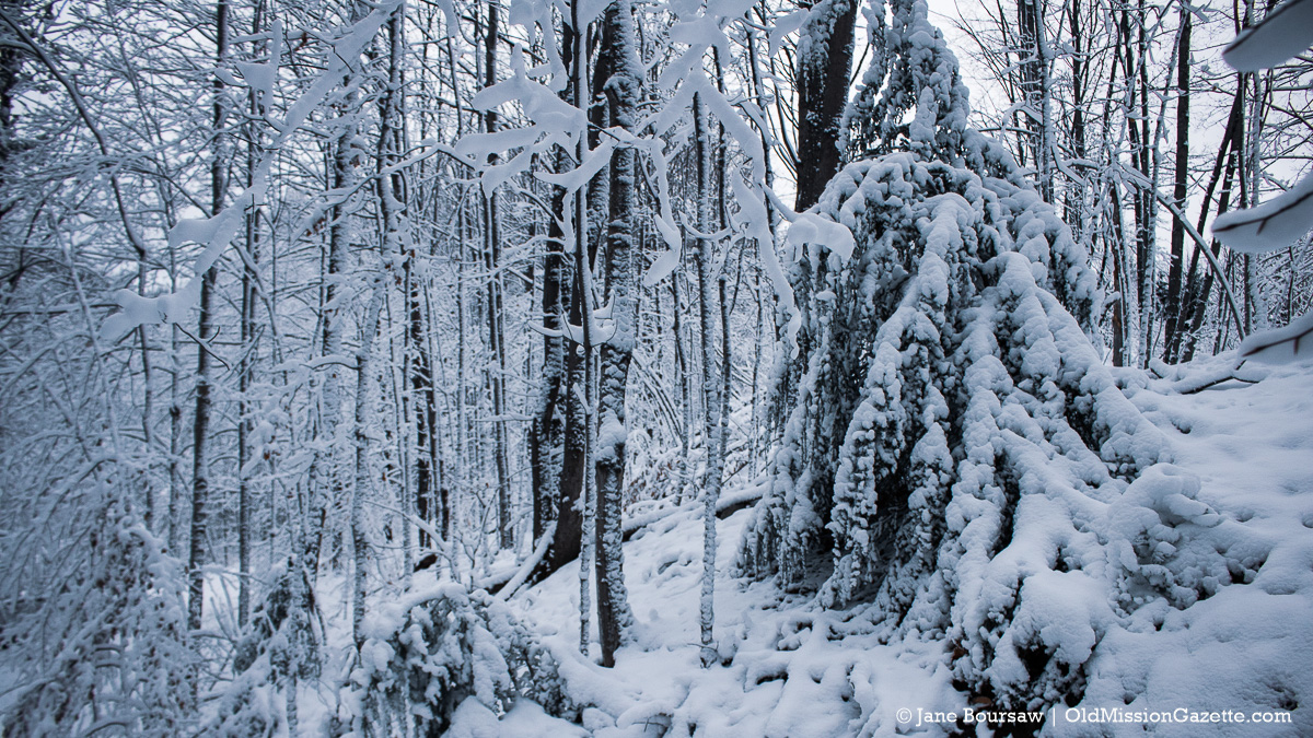 Snowy Bluff Road Woods; from Tim and Jane's driveway looking south into the Kroupa woods next door | Jane Boursaw Photo